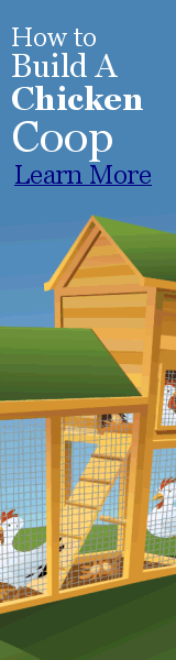 How To Build Your Own DIY Chicken Coop