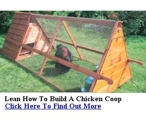 Build your own chicken coop step by step